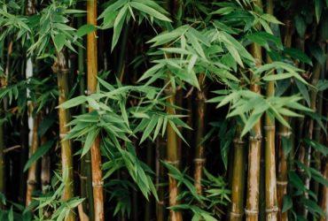 ecologische grondstoffen bamboe suikerriet maïs castorolie saponine wasnoten kurk biologisch katoen bijenwas tropisch hardhout